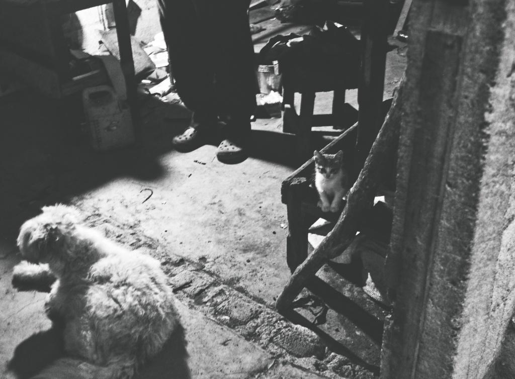 kitten black and white dog family