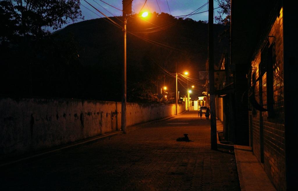 dog street lights night